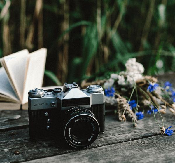 Holzsteg mit Schilf im Hintergrund auf dem eine Kamera, ein Buch und Blumen liegen